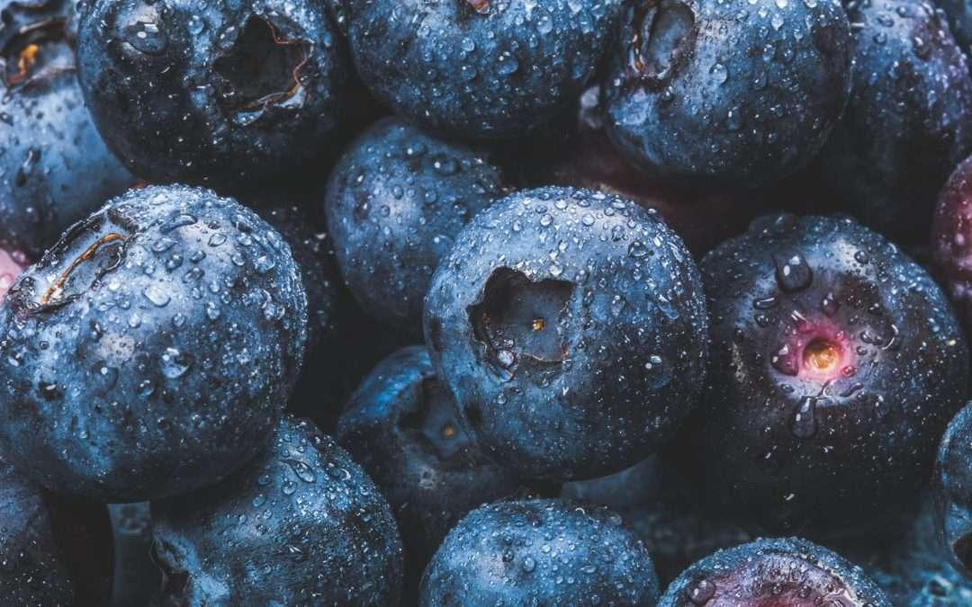 Seasonal Spotlight: Blueberries