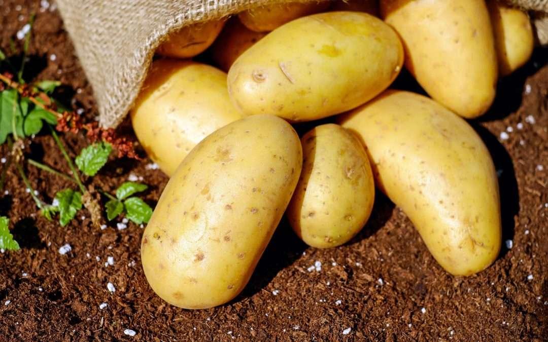 Seasonal Spotlight: Potatoes!
